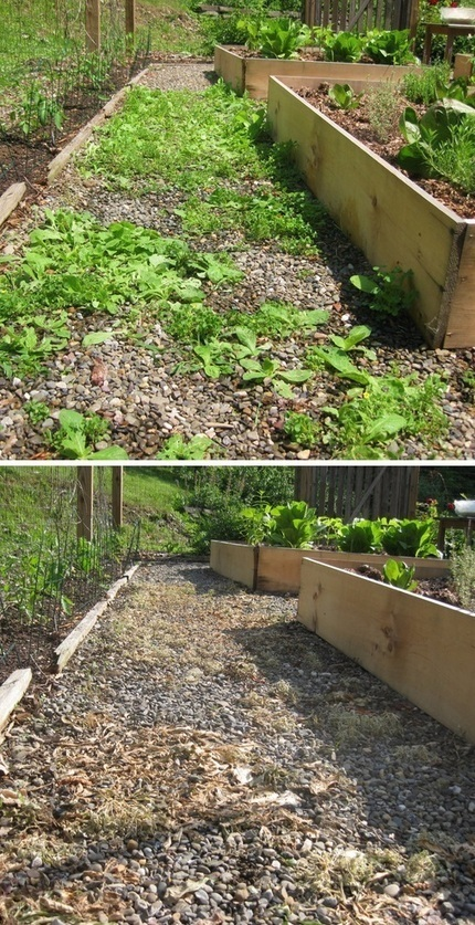 Spraying weeds with diluted vinegar to kill them | Backyard Gardening | Scoop.it