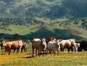 USGS Release: Home on the California Range, Year 2100: Land Use and Climate Change Could Impact Wildlife, Water Supplies (3/25/2015 1:00:00 PM)   Advocating for Wildlife   Scoop.it