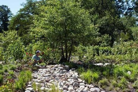 Brooklyn's Botanic Garden Goes on a Water Diet | water news | Scoop.it