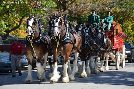 Running Rough Shod: Clydesdales, Clydesdales, CLYDESDALES!   HorsesOne   Scoop.it