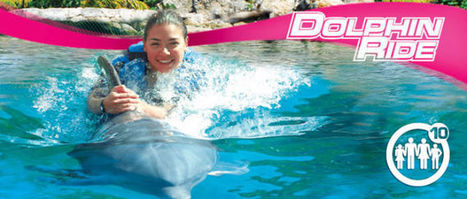 Was TBEX right to cancel its dolphin tours? I am not sure.   Responsible Tourism   Scoop.it