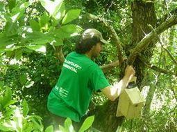 Provoca organiza un taller de cajas nido en el encinar de Peñas ... - Europa Press | Casa NIDO - HOUSE NEST | Scoop.it