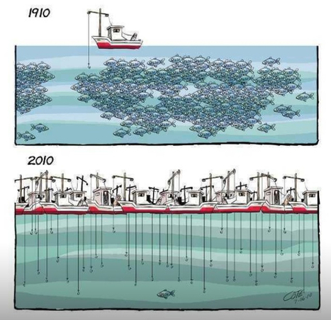 So many fish there in the sea… | Trends in Sustainability | Scoop.it