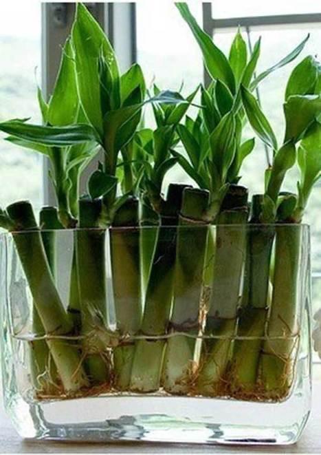 Ideas para decorar con bambú. | Mil Ideas | Decoración de interiores | Scoop.it