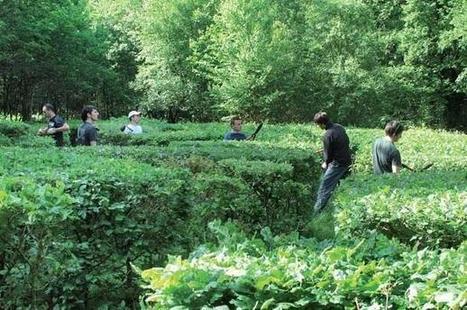 Jardin de l'année - les prix AJJH | Travaux paysagers | Scoop.it