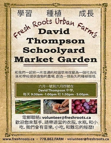 David Thompson Schoolyard Market Garden in Vancouver, BC | Food and Farming | This Gives Me Hope | Scoop.it