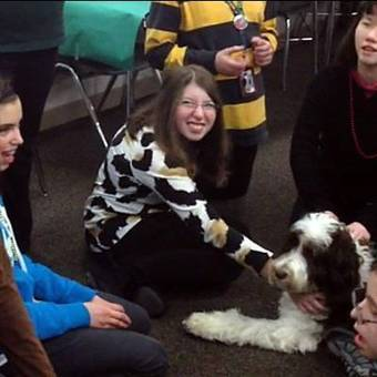 Therapy dogs help calm people under stress   Pet News   Scoop.it