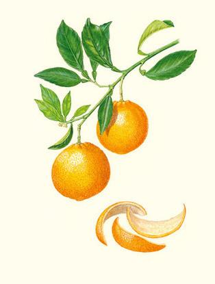 Puressentiel : Huiles essentielles-Aromathérapie-Cosmétique Bio et Naturelle-Aromathera   Huiles essentielles bio, huiles de massage   Scoop.it