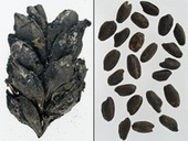 EUROPE : Researchers Discover First Use of Fertilizer | World Neolithic | Scoop.it