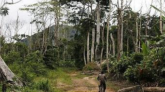 Afrique : les terres en danger | Africanews | ECONOMIES LOCALES VIVANTES | Scoop.it