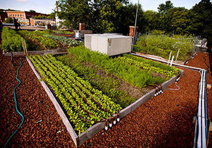 The nuts and bolts of urban agriculture and green roofs - Daily Commercial News | Growing Food | Scoop.it