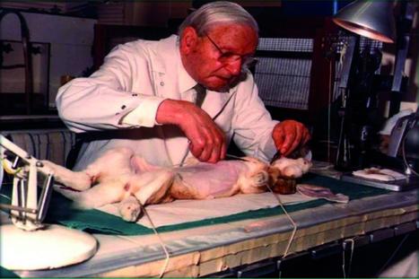 Advierten que en Perú no hay ley que regule el uso de animales en prácticas veterinarias   Agua   Scoop.it