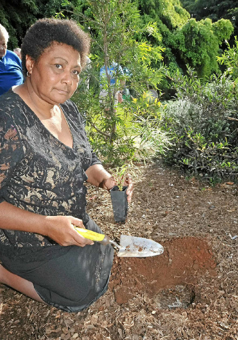 Tree-planting marks Sorry Day | Australian Plants on the Web | Scoop.it