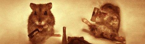 """Art Numérique : """"Quand les hamsters régnaient sur la terre""""   Libertés Numériques   Scoop.it"""