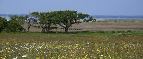 Isle of Wight Living Landscape   The Wildlife Trusts   Isle of Wight   Scoop.it