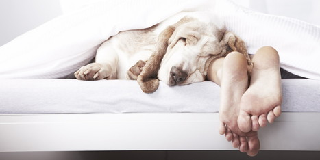 Where Sleeping Dogs Lie - Huffington Post | The Dog Blogger | Scoop.it