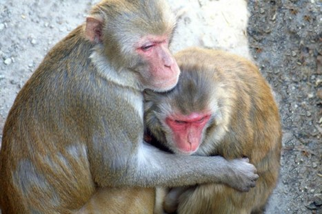 Lust, monkeys and the science of human desire | Philosophy, Thoughts and Society | Scoop.it