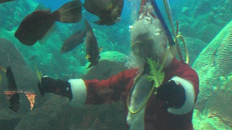 It's the season for #Scuba Santas! Have you seen yours? | Scuba Diving | Scoop.it