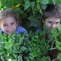 Edible School Gardens | Food Forever - Educating Kids about food production, healthy eating and food hygiene. | Scoop.it