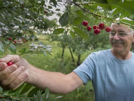 Beyond Organic at Miracle Farms in St-Anicet: Permaculture Transforms an Apple Orchard Into An Oasis | Permaculture: Organic Gardening, Homesteading, Bio-Remediation | Scoop.it