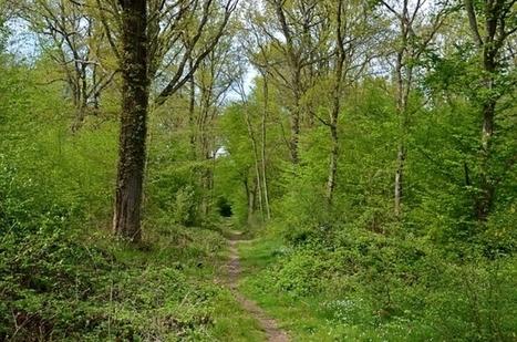 La forêt... ça peut être défiscalisé / France Inter | abibois | Scoop.it