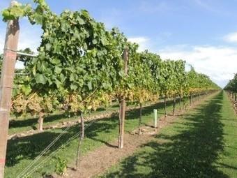 Verona. A Vinitaly genetica in campo per produrre vino sostenibile - VeronaOggi.IT | Fondazione Mach | Scoop.it
