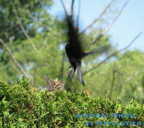 Angry Birds | Travel Musings and Photography | Scoop.it