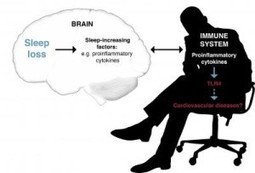 New Biological Links Between Sleep Deprivation and the Immune System Discovered   Brain & Learning   Scoop.it