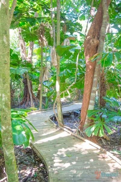 Road Trip from Port Douglas to Cape Tribulation in the Daintree Rainforest | Australia Travel Ideas | Scoop.it