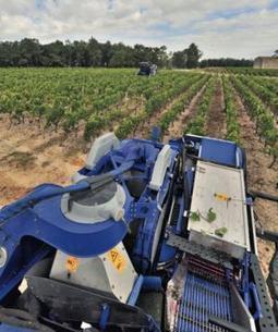 L'IFV estime à 250 hl/ha le rendement maximum d'une vigne | Christophe Durand Conseils | Scoop.it