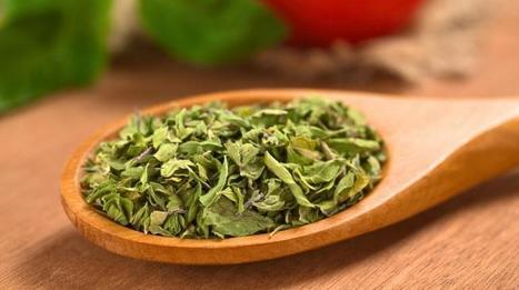 Oregano Shown To Destroy Norovirus, Most Common Cause Of Food Poisoning | Medical Daily | CALS in the News | Scoop.it