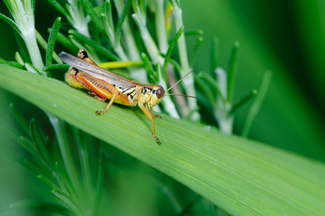 5 Reasons to Eat Insects - US News | Entomophagy: Edible Insects and the Future of Food | Scoop.it