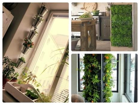 The Benefits of Having An Indoor Vertical Garden | Daddy Groovy | Wellington Aquaponics | Scoop.it