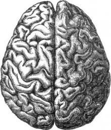 U.S. Big Brain Project Takes Next Big Step   Social Neuroscience Advances   Scoop.it