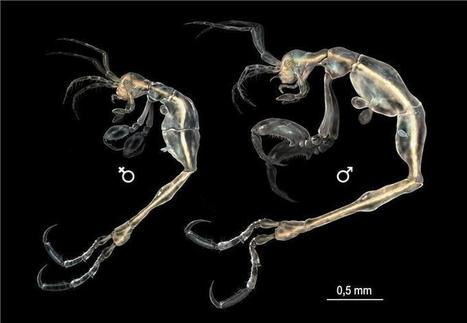 New Alien-like Crustacean Species Identified in California Waters - Nature World News | Aquaculture Research | Scoop.it