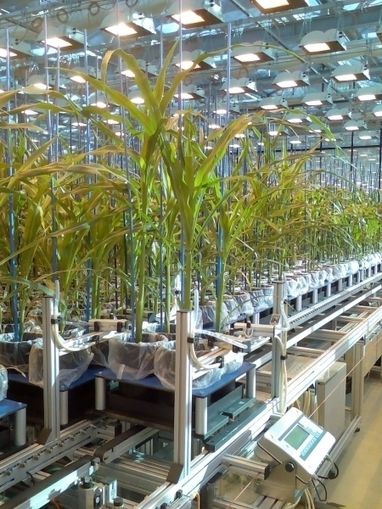 Forschungszentrum Jülich - Press releases - German Plant Phenotyping Network (DPPN) Launched | Erba Volant - Applied Plant Science | Scoop.it