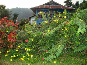 Take a Refreshing Break from the City Life and Enjoy Nature at Samsing Suntalekhola | Dooars Ecoviillege | Scoop.it