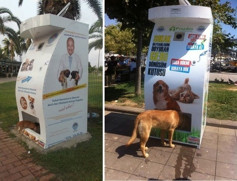 These Vending Machines for Stray Animals should be in every City around the World | Read, Think, Create | Scoop.it