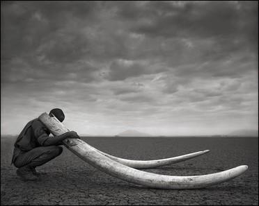 Nick Brandt : Photography | generalitats | Scoop.it