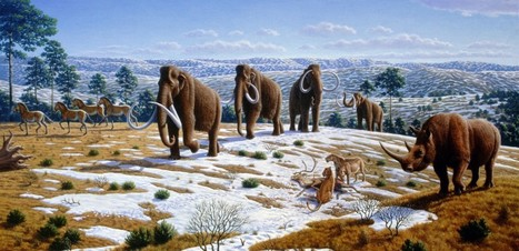 What really wiped out the Woolly Mammoth? | Biodiversity protection | Scoop.it