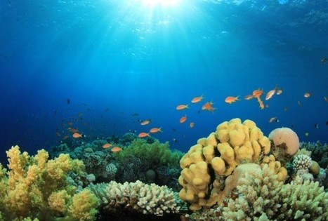 Juvenile Reef Fish Use The Sun Compass To Guide Them To Safety - RedOrbit | Amocean OceanScoops | Scoop.it