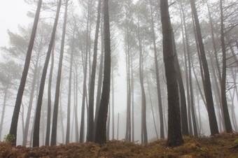 L'odeur des pins pour ralentir le changement climatique | méthodes de mesure et de limitation des odeurs | Scoop.it