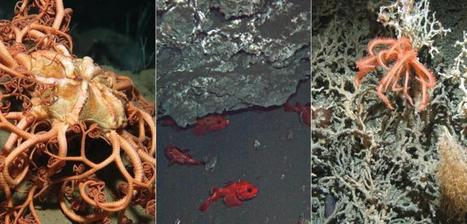 From 'Finding Nemo' to minerals—what riches lie in the deep sea? | Sustain Our Earth | Scoop.it