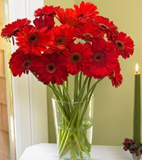 24pcs Red Gerberas deliver to your Father on Fathers Day– Red_Gerberas_Bouquets#021 | mother's day flower | Scoop.it