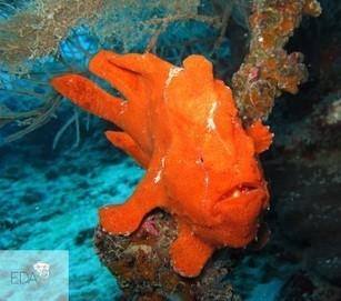 Diving in Maldives - Élite Diving Agency | Scuba Diving | Scoop.it