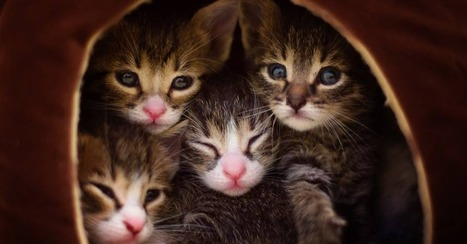 Photo Series Documents Tiny Kittens From Rescue to Adoption | Cats | Scoop.it