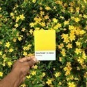 The Pantone Project | CRAW | Scoop.it