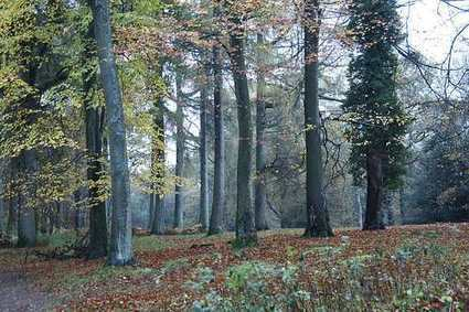 England Public Forests Safe From Proposed Government Sell-Off | Farming, Forests, Water, Fishing and Environment | Scoop.it