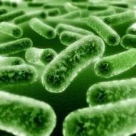 Microbiología alimentaria - Alianza Superior | Microbiología alimentaria | Scoop.it