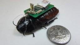 """BioBot"" Roaches May Be Key to Find Survivors 